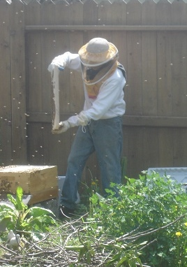 Ken beekeeping