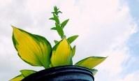 Go Green Ideas for Eco-Friendly Living