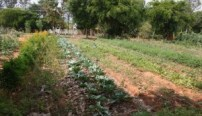 Organic garden in Prakriya Green Wisdom School