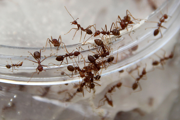 7 Steps to get rid of ants
