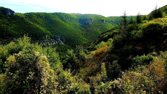 Blick in die Tarnschlucht bei Millau, Auvergne, Frankreich