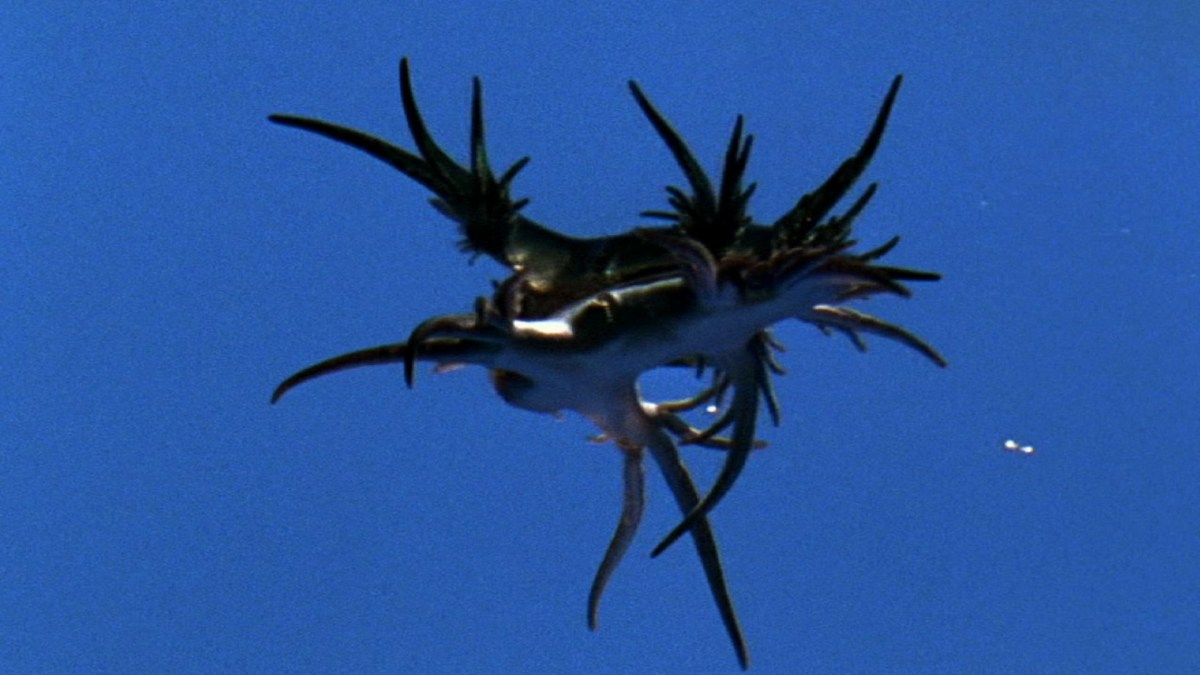 World's Weirdest - Amazing Sting Defense