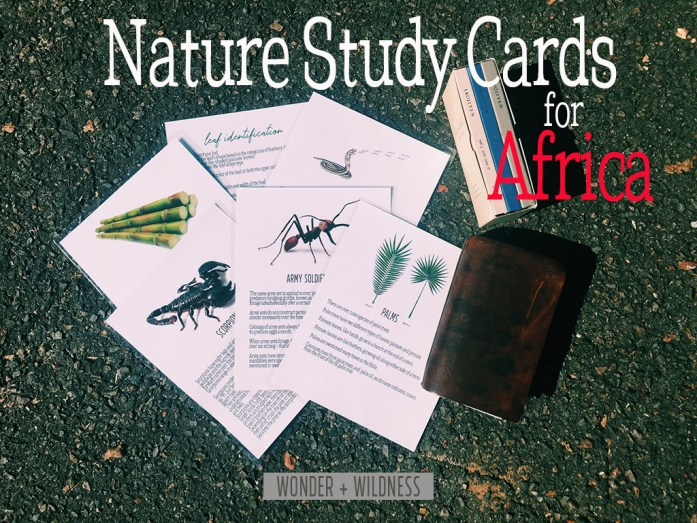 Nature Study cards on Africa wildlife and nature and bugs