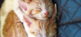 Lovely Kittens, You will surely smile