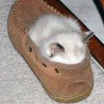 Lovely Kittens 7