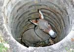 Donkey in the well (Motivational Story)