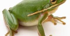 Two frogs – A short inspirational story