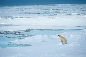 High Arctic