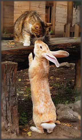 Cat & Rabbit