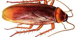 Cockroach is the fastest animal on 6 legs