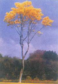 tree where Raman was cremated