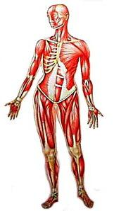 facts about human body