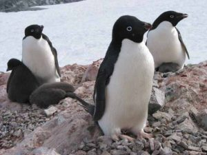 Antarctica Photo 11