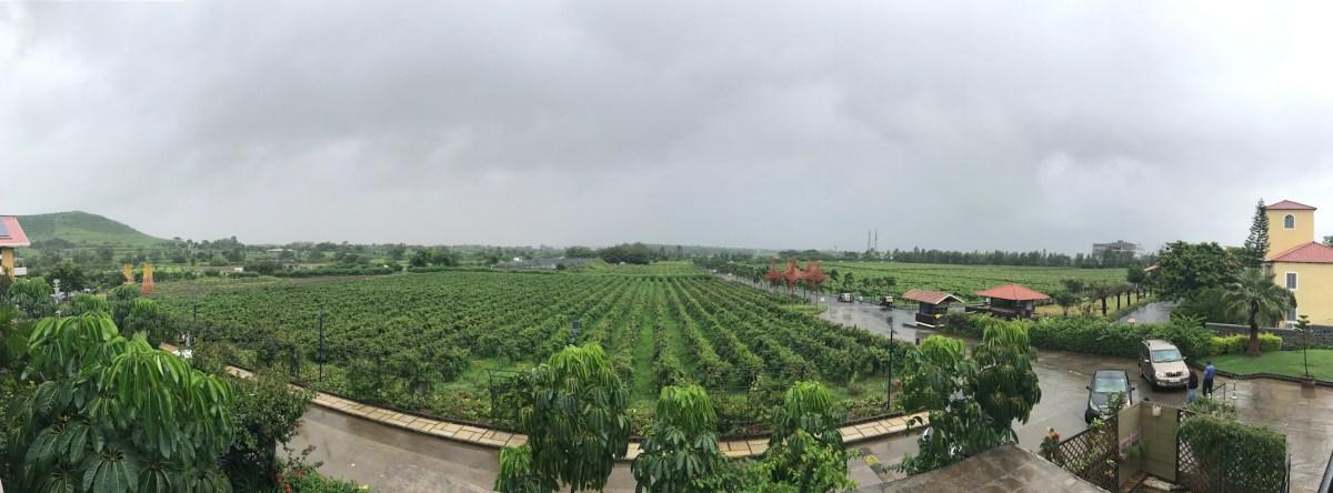 Nashik, dove nasce il vino indiano