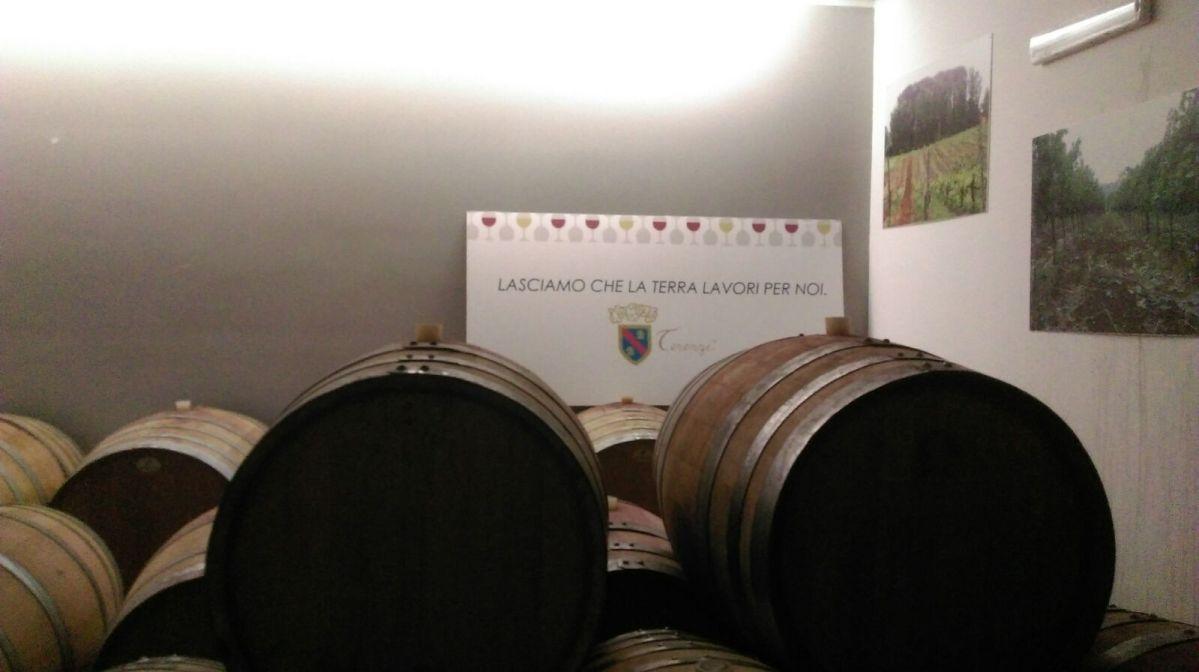 Le vigne del Cavalier Terenzi