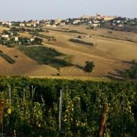 Verdicchio Tenuta San Marcello: un sorso dorato di natura