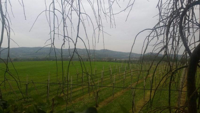 Villa Favorita - immagine paesaggio vicentino