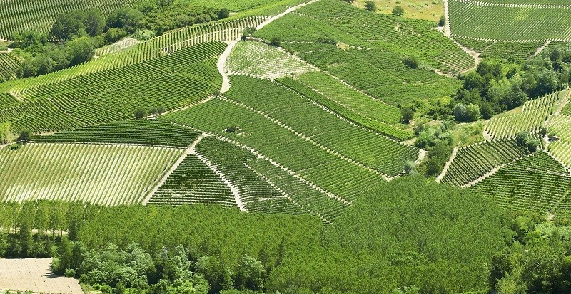 Terre del Barolo - Evento - Castiglione Falletto