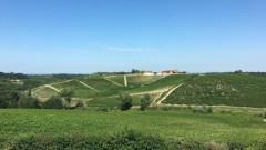 Colline di Gavi