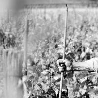 Sergio Arcuri: naturalezza e tradizione di Calabria