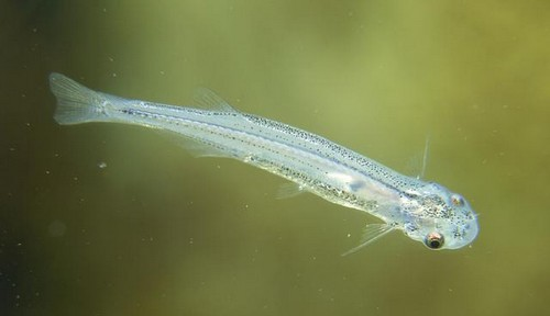 Most Dangerous Fish