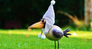 Creepy and Funny Looking Birds