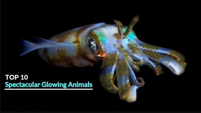Spectacular Glowing Animals