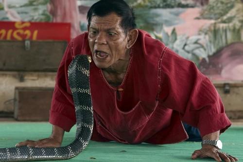 King Cobra Fighting