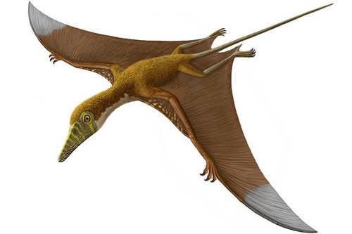 Pterosaurs, Myths About Dinosaurs