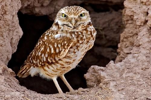 Birds With Strange Defences
