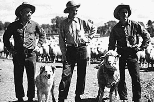 Sheepmen vs. Cattlemen