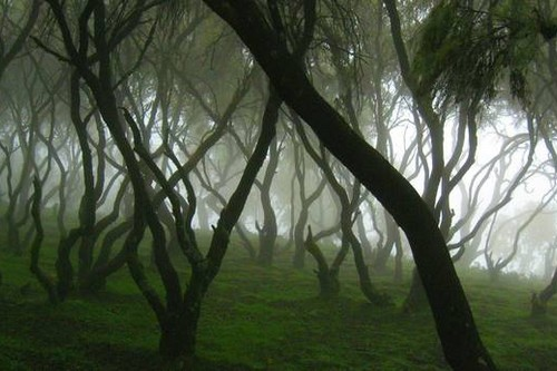 Cloud Forest in the Simien Mountains, Ethiopia