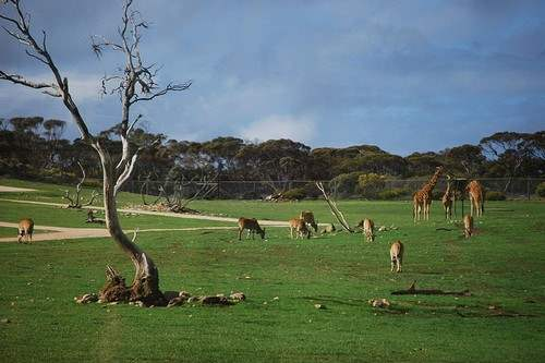 10 Most Fascinating Zoos in the World