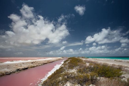 Bonaire Pink Beaches