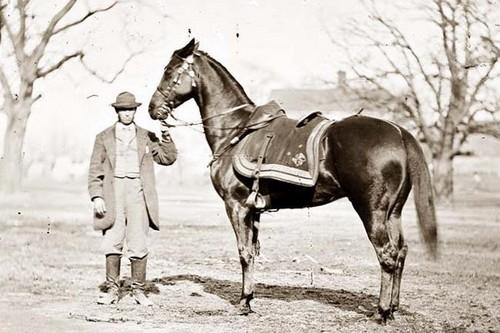 Cincinnati Famous War Horses