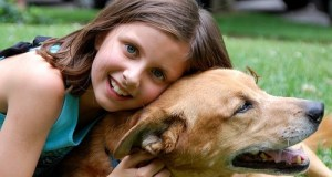 Top 10 Dog Breeds to Join Your Family