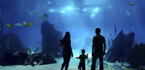 Most Amazing Aquariums