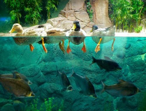 Shanghai Ocean Aquarium, Shanghai