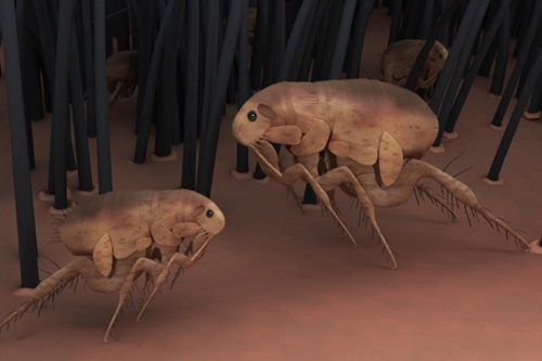 bizarre attempts to weaponize insects