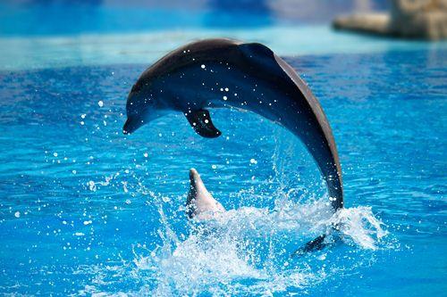 Dolphins Smartest Animals