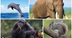 Top 10 Smartest Animals