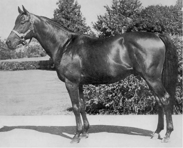 Citation Best Race Horses