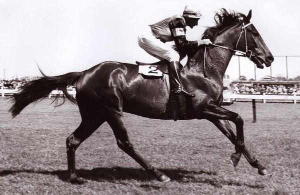 Phar Lap Best Race Horses