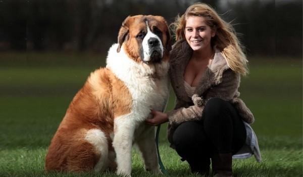 World's Biggest Dog Breed