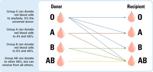 The universal Blood type is O
