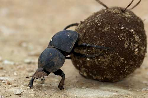 World's Strongest Insect