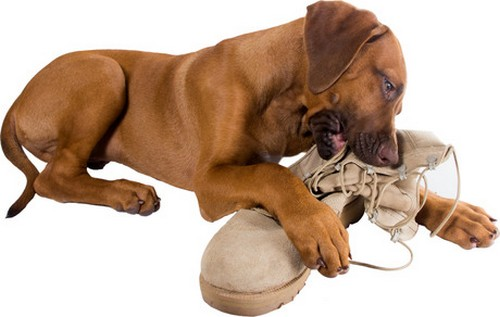 Stop Dogs From Destructive Chewing