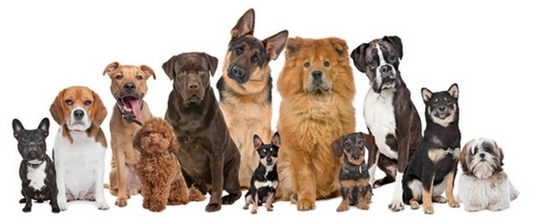 Most Popular Pets in America