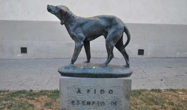 Fido (dog)
