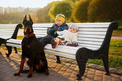 Best Guard Dogs for Families